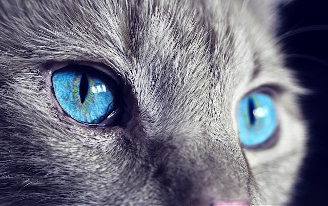 Полски министър: Домашните котки са приносители на коронавируси