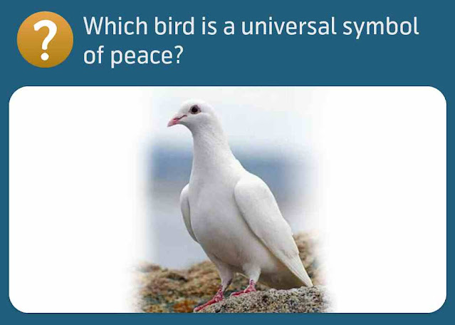 Which bird is a universal symbol of peace?