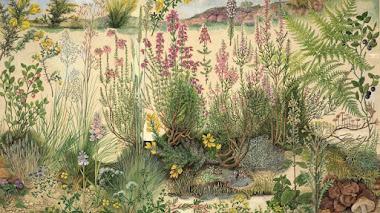 Plantas silvestres en su hábitat natural ilustradas por Barbara Nicholson (British ecosystems)