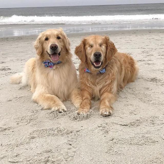 Μπορεί να ακούγεται σπάνιο αλλά ένας σκύλος μπορεί να έχει έναν άλλο σκύλο για οδηγό
