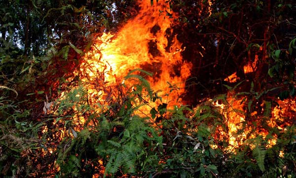 Cháy rừng xã Nam Kim diễn ra dữ dội trong ngày 30-6