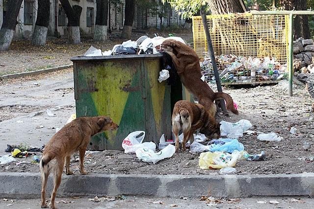 "В Баку собаки согревали младенца, брошенного возле ""мусорки"" - ФОТО"