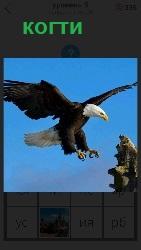 орел выпустил когти