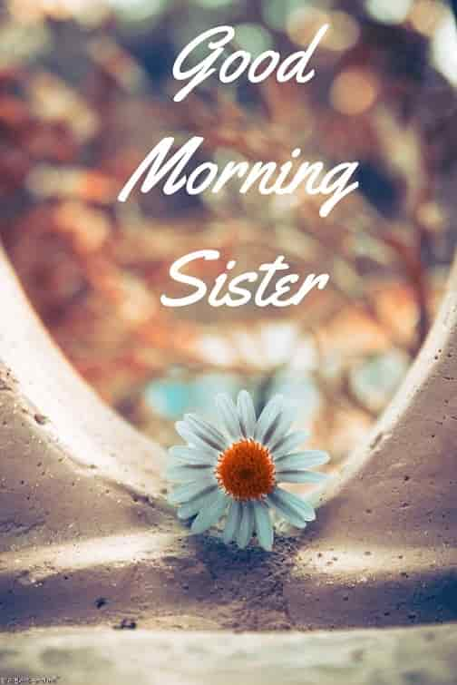 good morning sister with rose