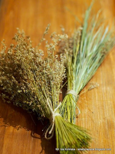 trawa zubrowa, zubrowka, ziele podlaskie, podlasie, trawy, dzikie rosliny, aromatyczne zielsko, chwasty, pachnaca trawka