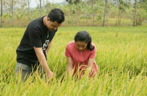 kelebihan gadis desa