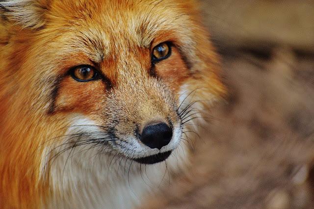 Wörterliste, Beschäftigungsideen, Aktivierung, Ideen zum Fuchs, Fuchswörter