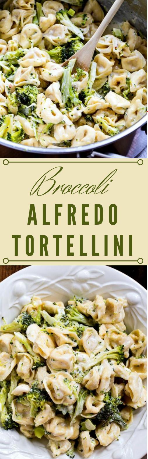 Broccoli Alfredo Tortellini #broccoli #vegan #vegetarian #tortellini #breakfast
