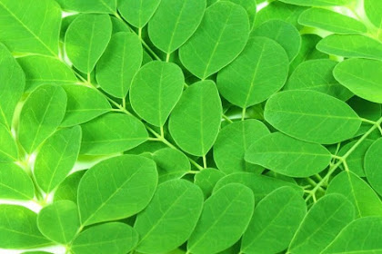7 Moringa Health Benefits, Can Increase Libido