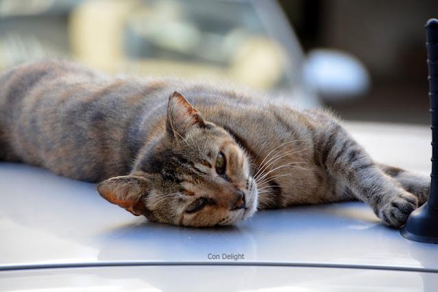חתול שוכב על גג של רכב ליד אנטנה