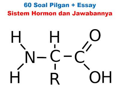 Soal essay tentang sistem hormon dan jawabannya