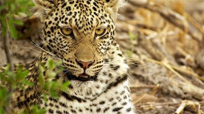 """Cena de """"Leopardos Pescadores"""" - Divulgação"""