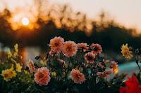 Flowers and Sun - Photo by Irina Iriser on Unsplash