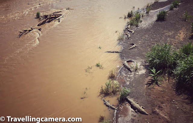 Costa Rica, Crocodile Bridge, Croc Bridge, San Jose, Jaco, Tarcoles River, American Crocodile, Nature, Wildlife,Wildlife Photography,