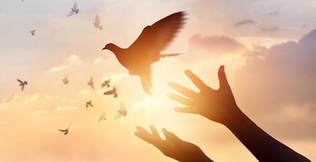 Healing : The Great Transformation - Prerana Rathod