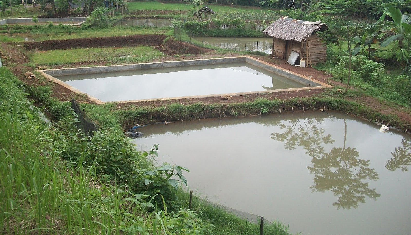 Balai Penyuluhan Kajen Budidaya Ikan Air Tawar Di Desa Tanjung