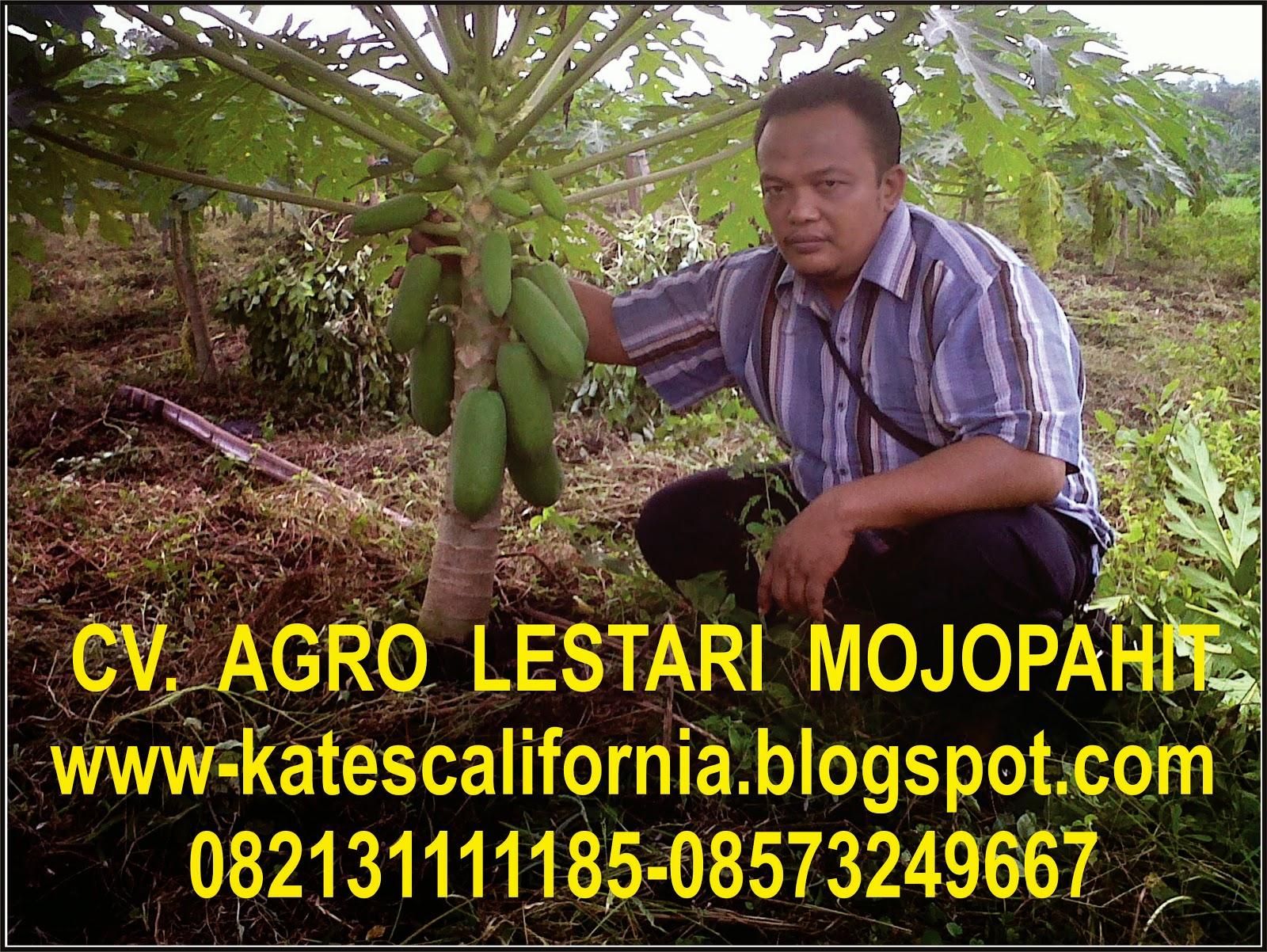 http://wwwlestarij4y4.blogspot.com/2008/07/konstruksi-baja.html