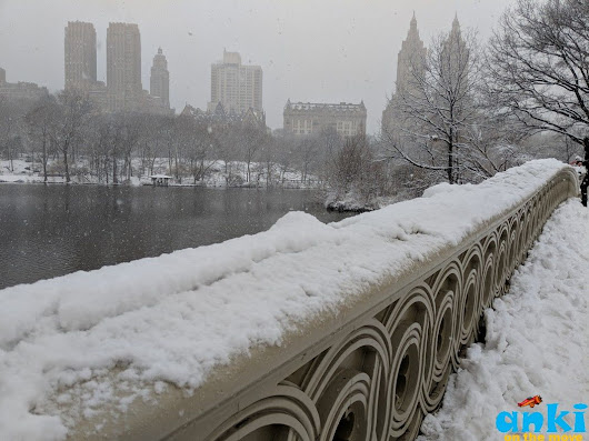 Anki On The Move: Central Park in all seasons | New York