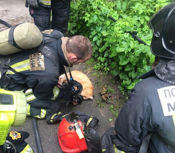 Давшие кислород коту петербургские пожарные стали героями соцсетей