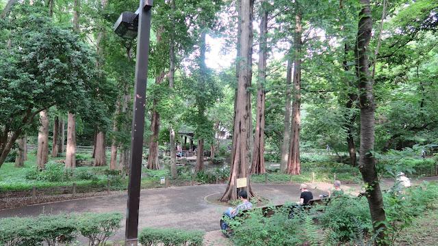 Relax in rinshinomori park