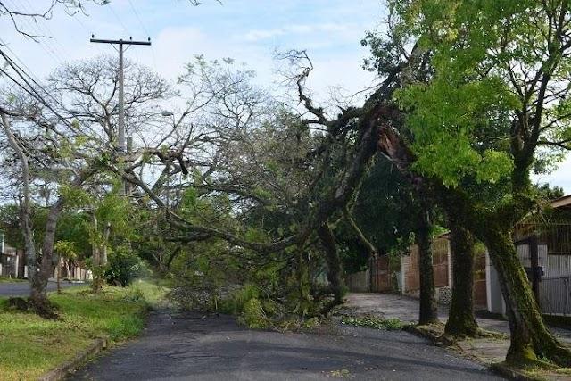 Ventos de até 83km/h derrubam árvores e destelham casas em Porto Alegre