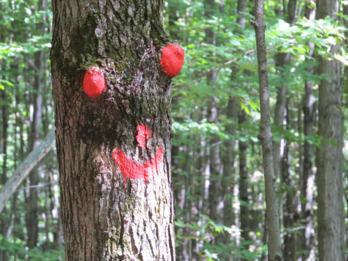 smiley face on tree