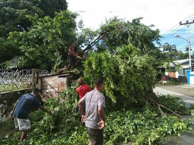 Polisi dan Mahasiswa Gotong Royong Bersihkan PohonTumbang di Jl.Buper Waena
