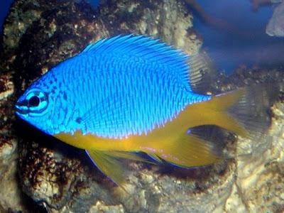 Spesies-spesies Hewan Baru yang Ditemukan di Papua