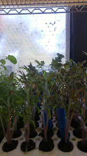 Preparation for 2018 Planting