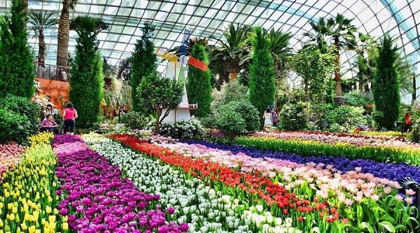 Garden by the bay Sở hữu nhiều khu vườn hoa cực kỳ lung linh