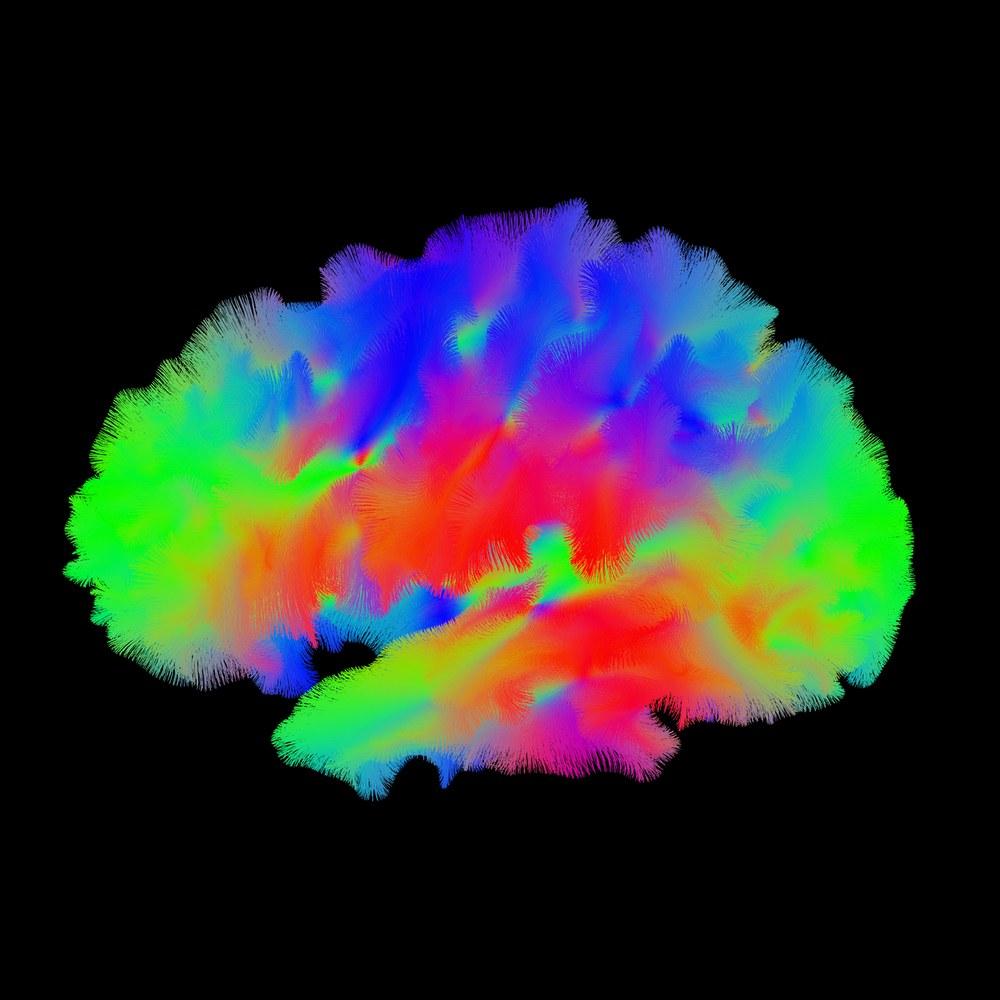 a1d686707 Cérebros humanos em miniatura crescem em laboratório com seus ...