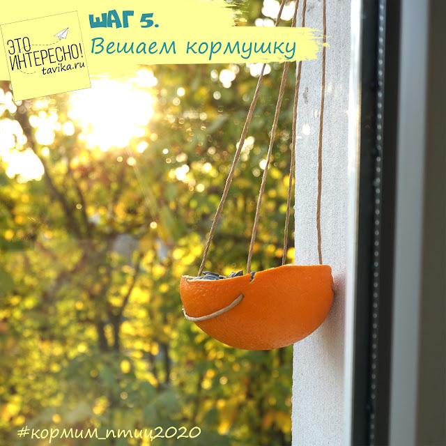 кормушка из кожуры апельсина своими руками