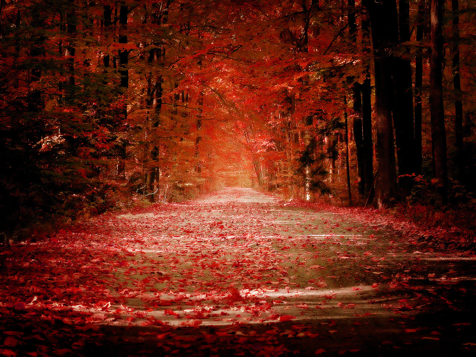 red fall wallpaper - photo #2