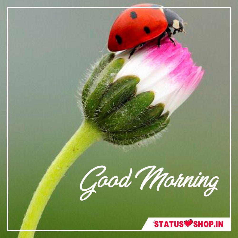 Good-Morning-Image-Download