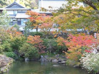 円覚寺のカエデ
