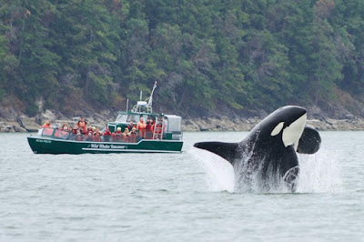 Whale Watching Deals in Vancouver