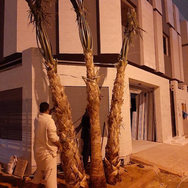 شركة تكريب وتنظيف النخيل بجدة - شركة متخصصة في تنظيف وتكريب النخيل في جدة