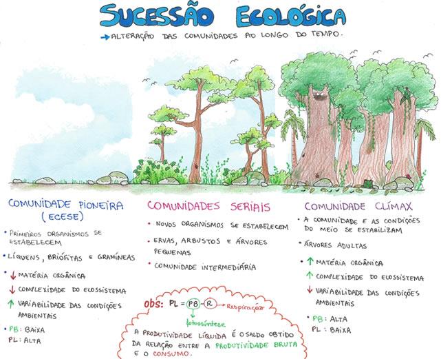 Sucessão Ecológica Primária e Secundária.