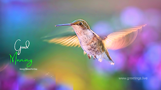 Morning greetings with hummingbird flying image