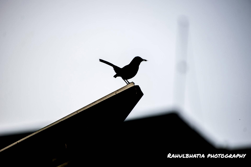 """Bird or Birds"" - Photography Contest Entry by Rahul Bhatia"