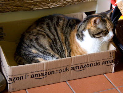 cat in a box from Amazon