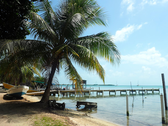 Palm trees and piers on the shore of Caye Caulker, Belize