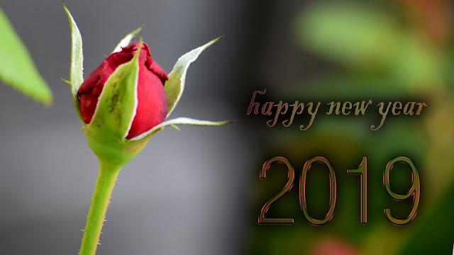 happy new year whatsapp status shahrukh khan