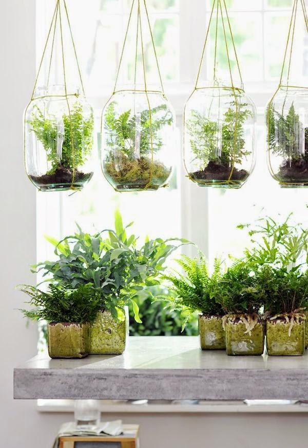 Vosgesparis Ferns Terrariums Creating A Glass Covered