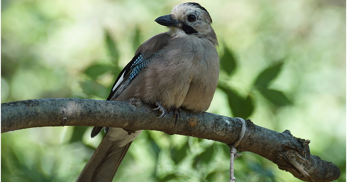 птицы краснодарского края фото и описание проезда