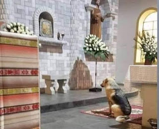 Do Animals see beyond the physical, Eucharistic miracle, Jesus present in the blessed Sacrament, Dog found living person in the Tabernacle