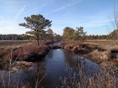 Bertha canal at restored cranberry bogs, Pine Barrens, New Jersey