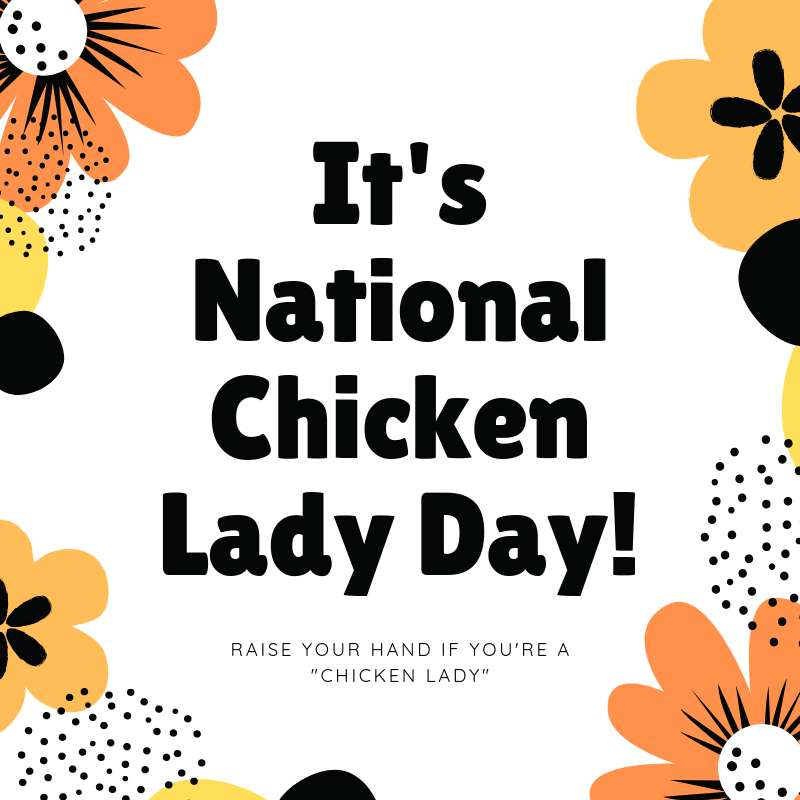 National Chicken Lady Day Wishes Lovely Pics