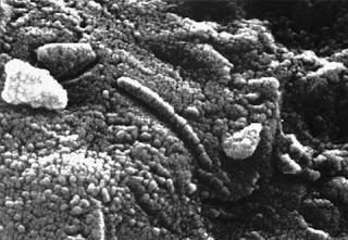 Pesquisadores encontraram uma pedra marciana na Antártida que conteria nanobactérias fossilizadas. Isto levou a especulações de que o asteróide teria ido parar no planeta bilhões de anos atrás e pode ter originado as formas de vida que hoje temos. Imagem mostra foto ampliada no meteorito Alh84001, com estrutura que parece ser a de um microorganismo fóssil