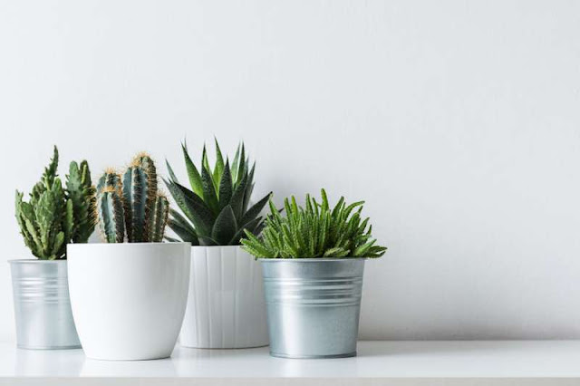 5 Plants That Bring Negative Energy At Home